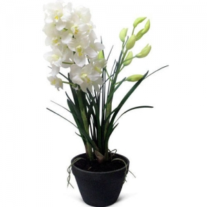 Купить орхидею Цимбидиум в Комсомольске-на-Амуре