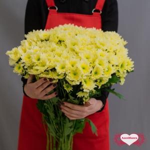 Хризантема кустовая жёлтая