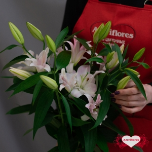 Купить лилию в Комсомольске-на-Амуре