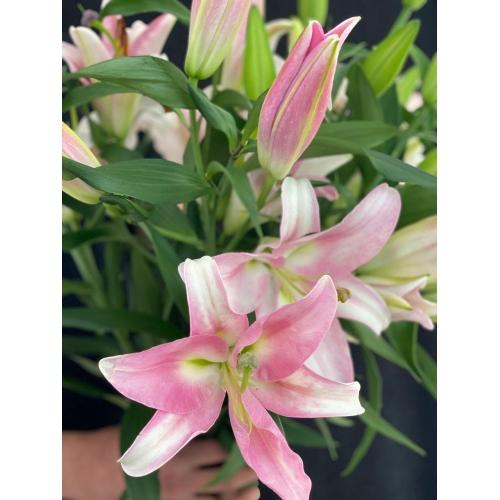Купить розовую лилию поштучно с доставкой в [r-seoseo-city-name-pp]
